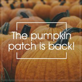 Pumpkins in pumpkin patch fall and autumn social media post template
