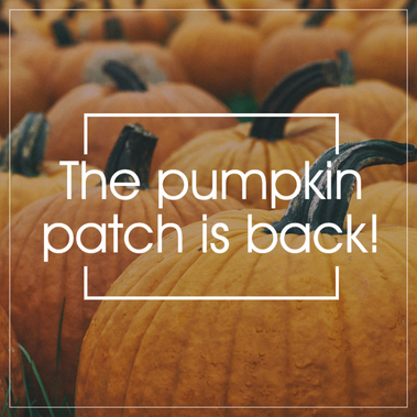Pumpkin patch social media post template for Fall and Halloween with field of pumpkins