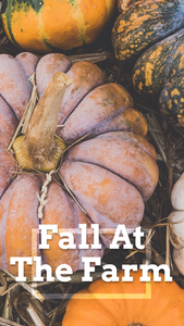 Pumpkin patch fall at the farm social media story template for Instagram stories and Facebook stories for Fall and Halloween