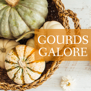 Gourds galore Thanksgiving and Fall post template with pumpkins and squash in a basket