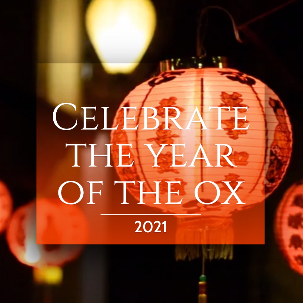 Chinese New Year social media post template for the year of the ox with a red lantern