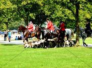 Schleppjagd am Schloss 2011 (4).jpg