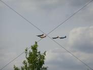 Flugtag 2003 (8).jpg
