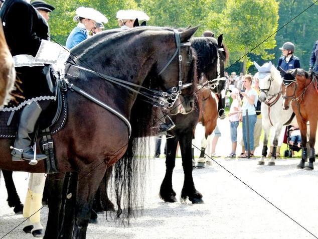Schleppjagd am Schloss 2011 (30).jpg