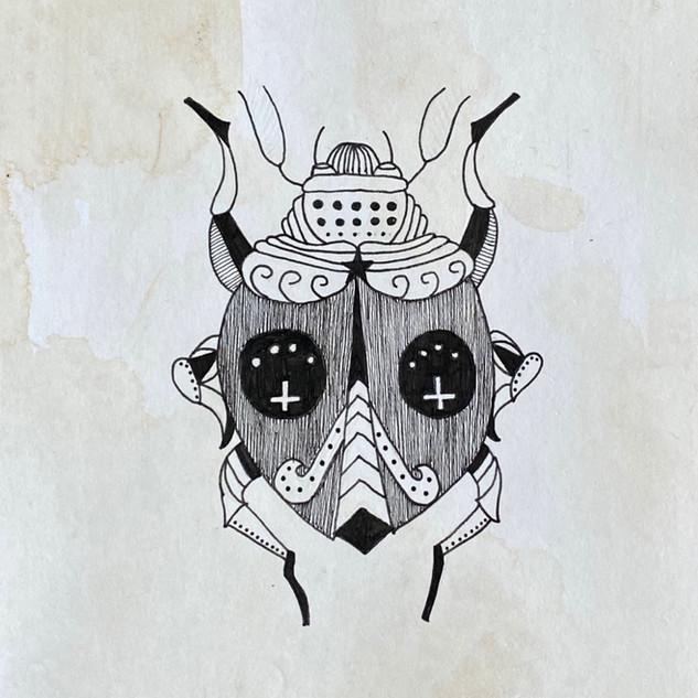 Eve Beetle