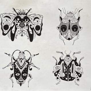 Caligula Beetle Collection
