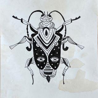Endora Beetle