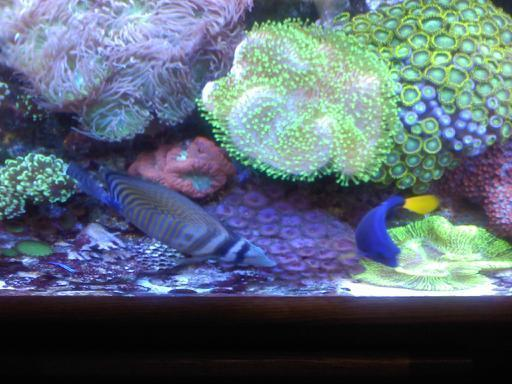 75 gal reef