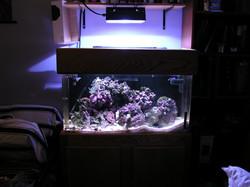 50 gallon reef