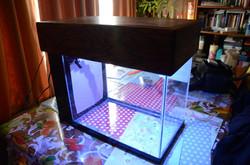 custom build 20 gallon nano