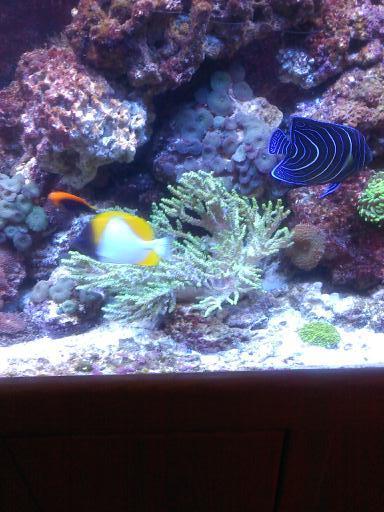 125 gal marine reef gallery