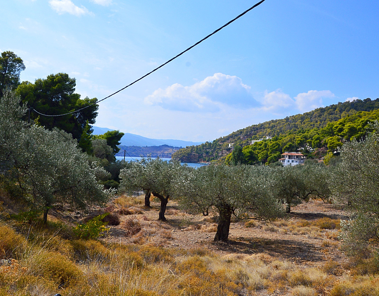 The most stunning entrance to a beach via this olive grove that leads down to the water