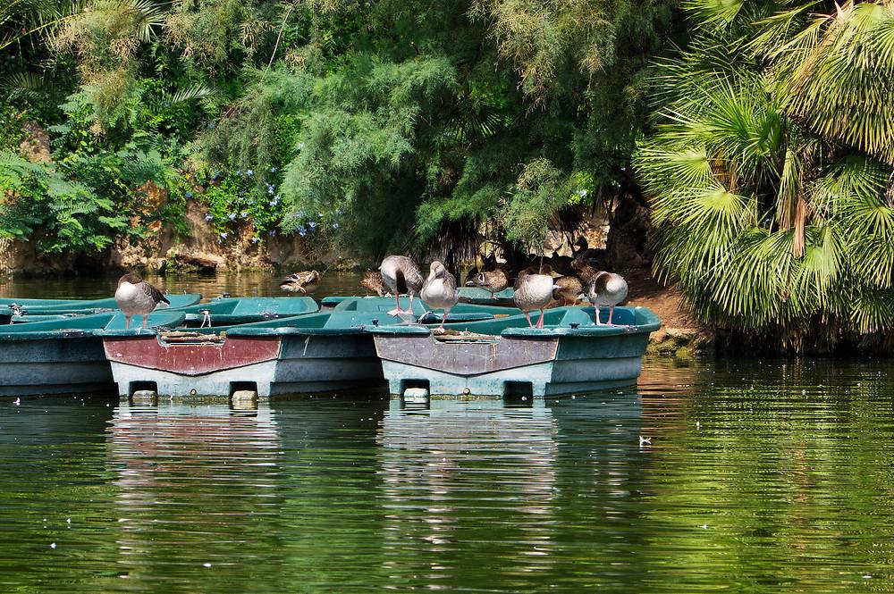 Rowing boats at the Parc de la Ciutadella