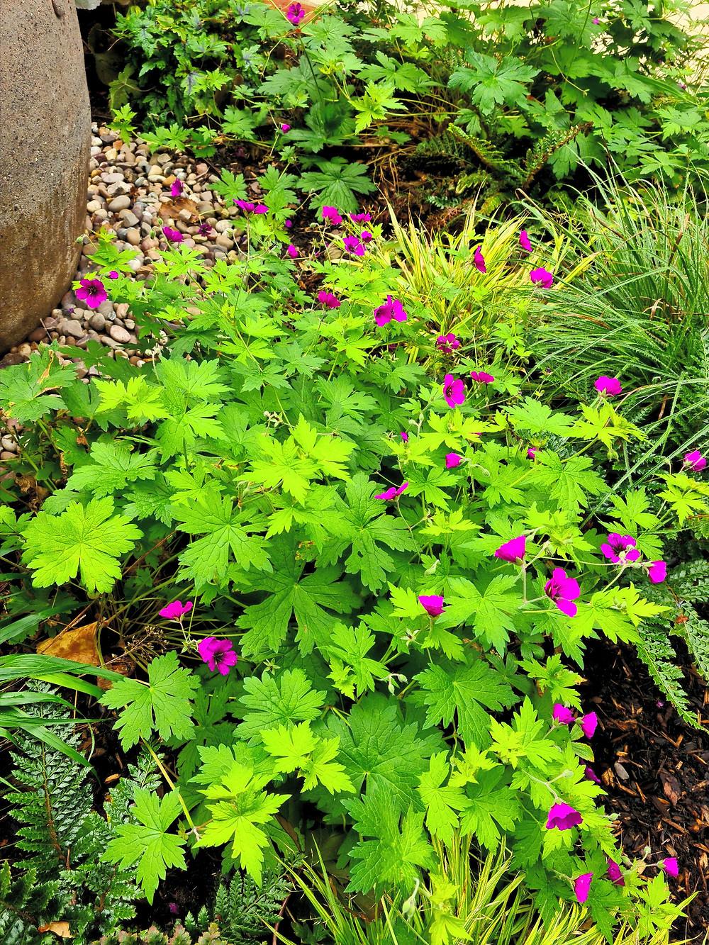 London Basement Courtyard Garden