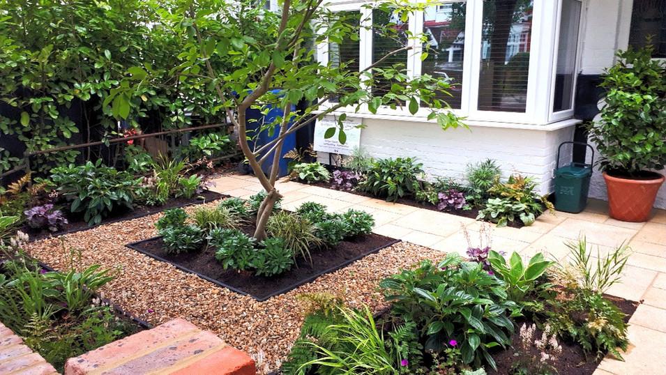 Super Shady Front Garden