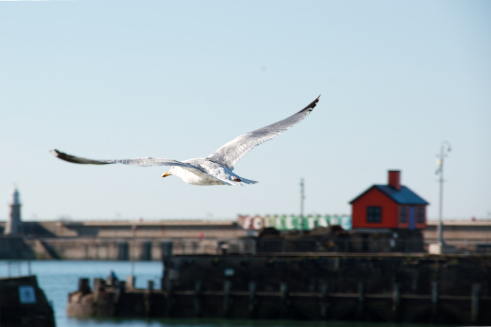 Folkestone with seagull