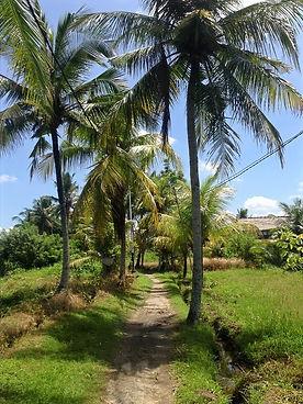 Bali-palm-tree