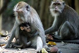 monkey-family-5372027_640.jpg
