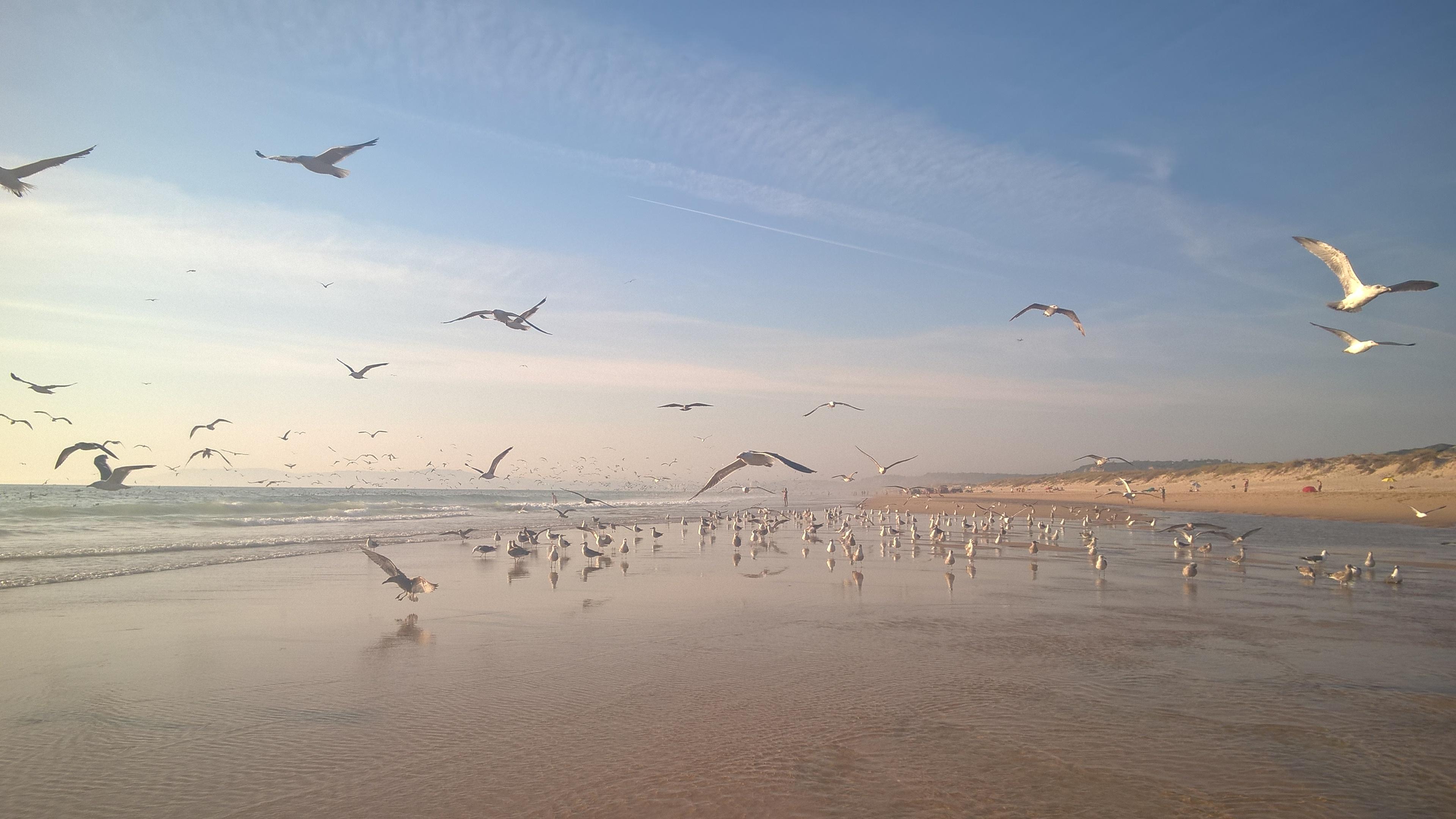portugal the beach