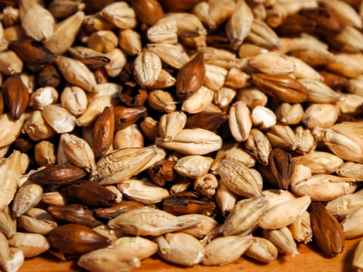 Le maltage de nos céréales