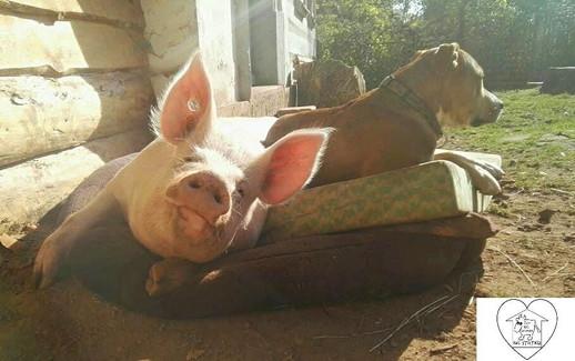 Život bez krutosti na statku - Azyl nejen pro hospodářská zvířata