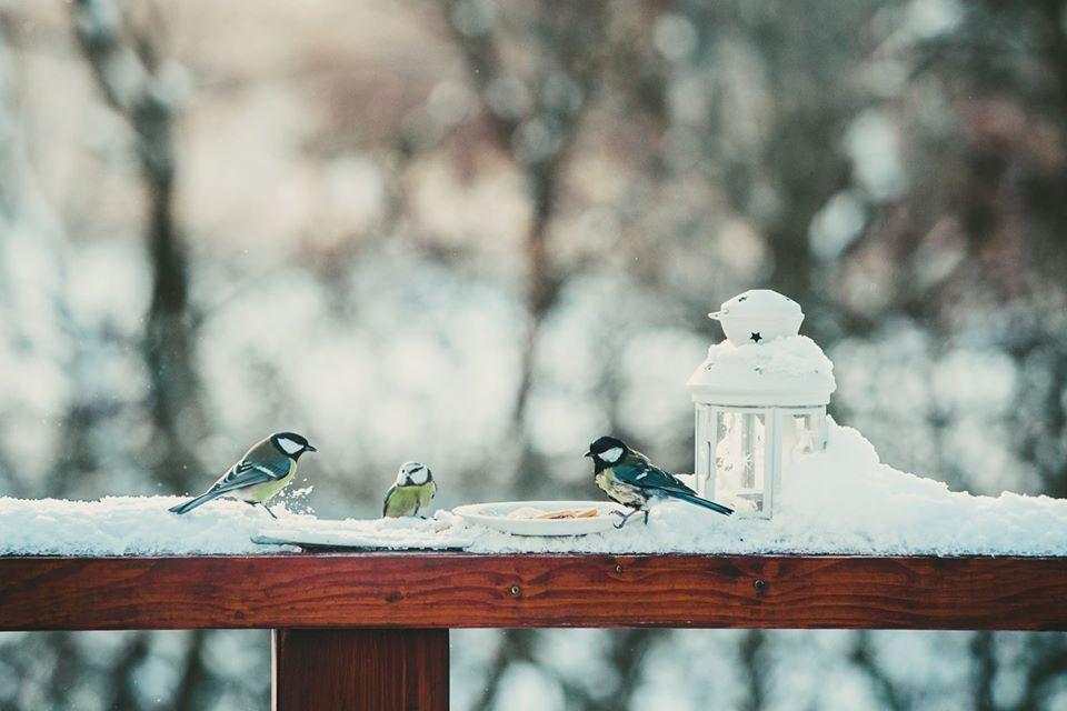 Něco pro ptáčky ve volné přírodě