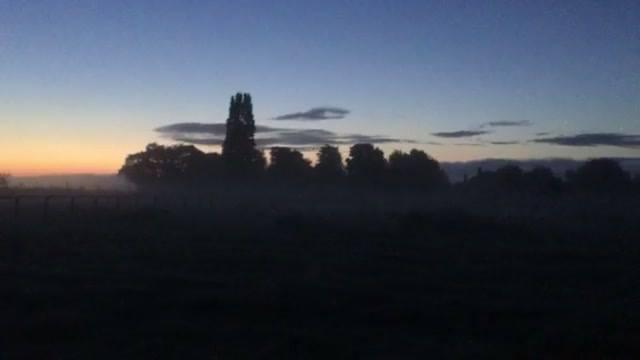 Dawn chorus across the campsite