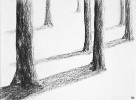 La verticalité / l'arbre