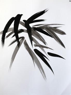 Encre de Chine / végétaux