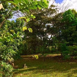 Jardin. Avril 2020