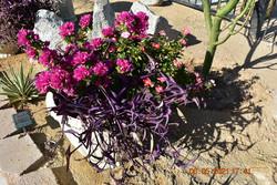 Vibrant Flowers