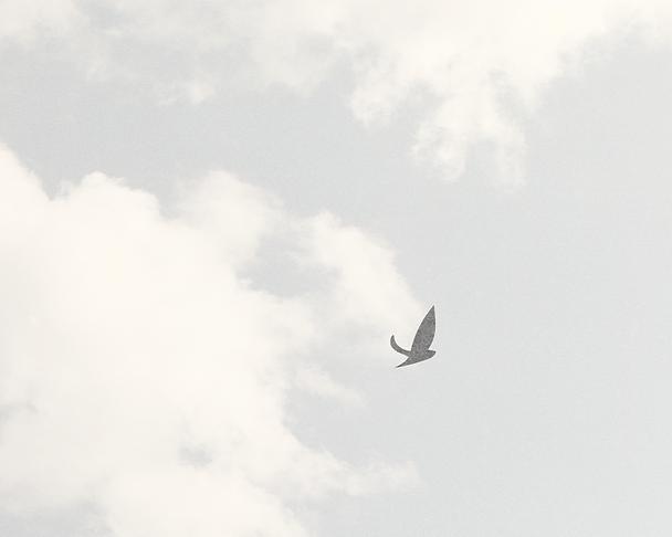 Birds_Portfolio.png