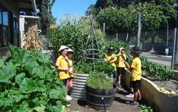 Organic Garden Trail MR 011