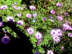 Organic Garden Trail MR 072