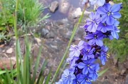 LHF Rear Terrace Flax In Bloom b