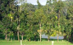 Trail BRV Forestview Farmstay 03