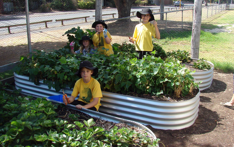 Organic Garden Trail MR 008