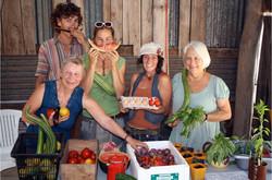 Organic Garden Trail MR 080