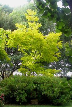 Organic Garden Trail MR 031