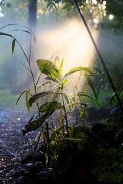 Organic Garden Trail MR 035