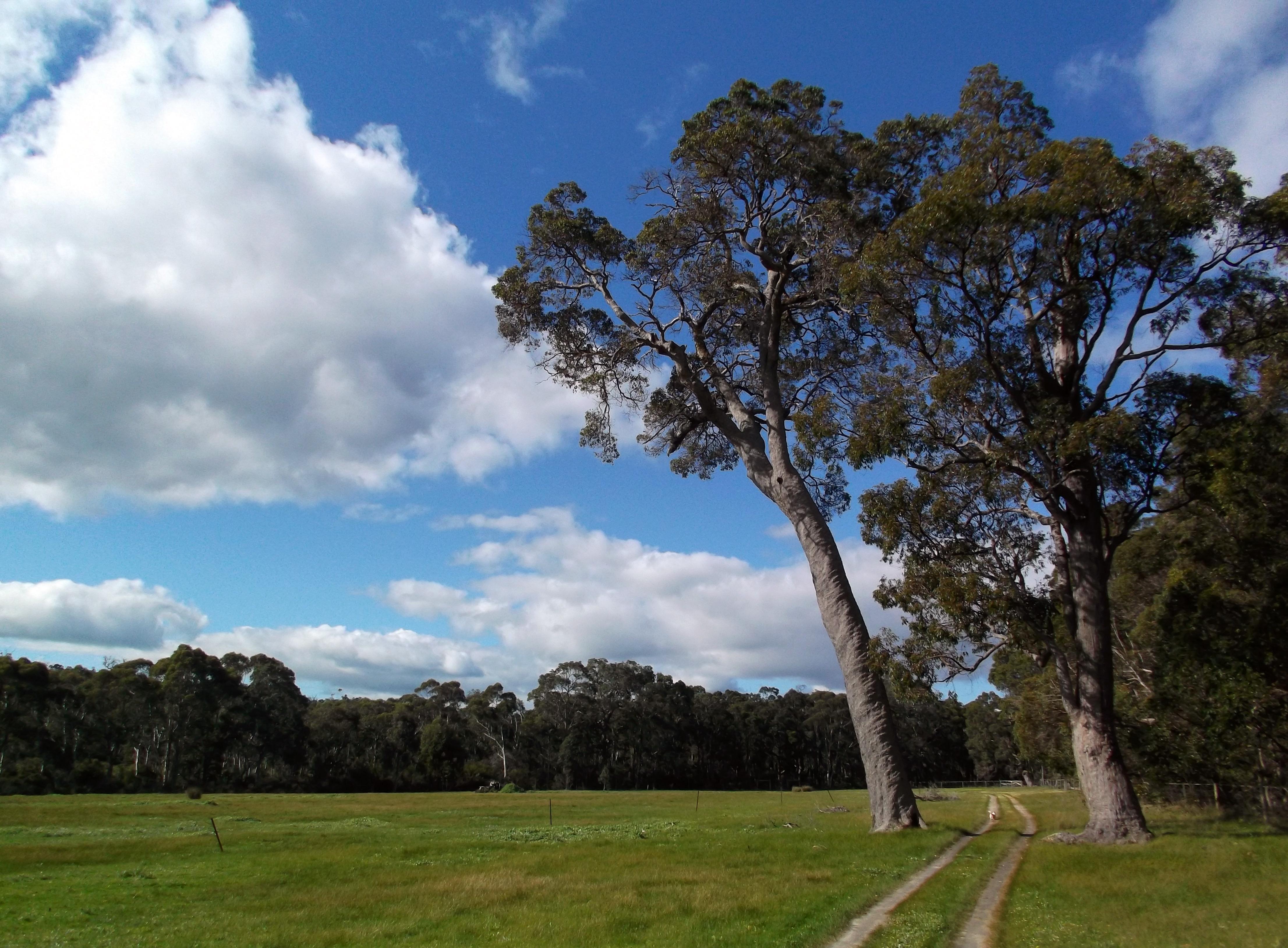 Organic Garden Trail MR 048