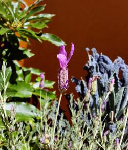 Organic Garden Trail MR 056
