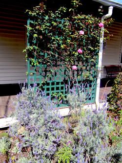 Organic Garden Trail MR 068