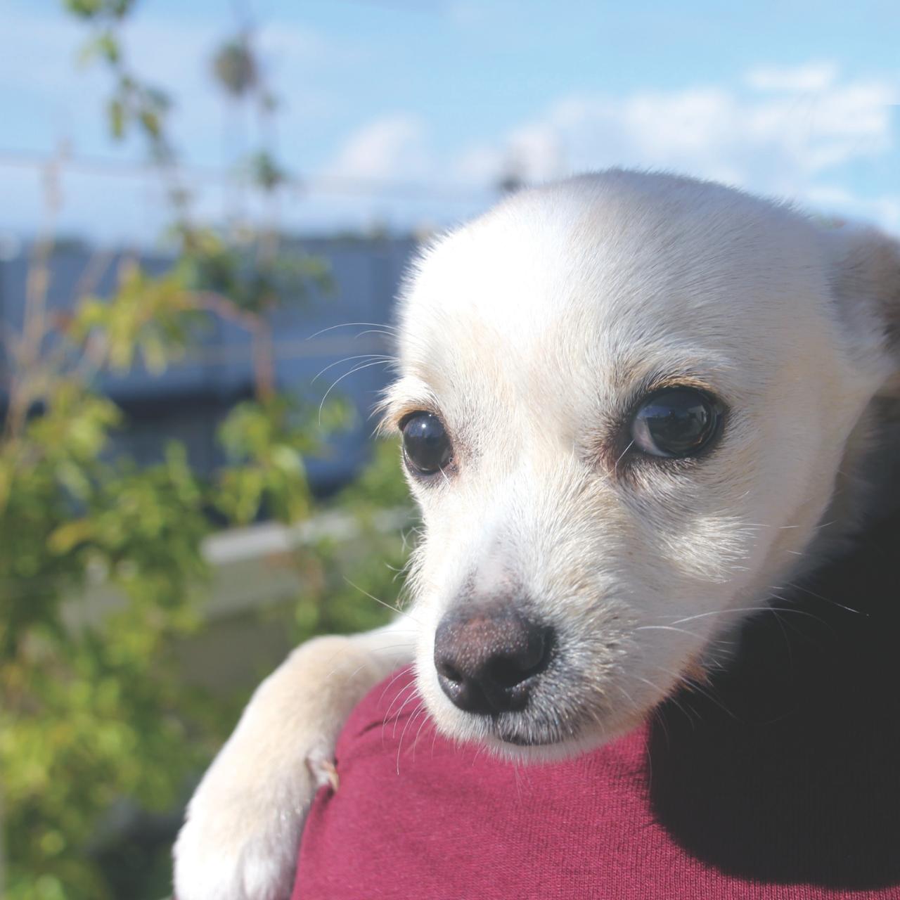 Pet's In Need - Redwood City