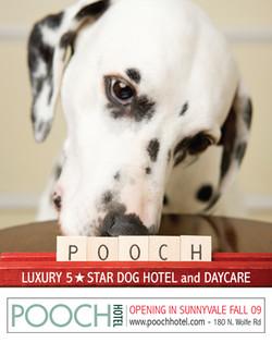 POOCH - Advertising