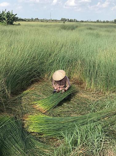 YNI strawlific woman tying bundle in fie
