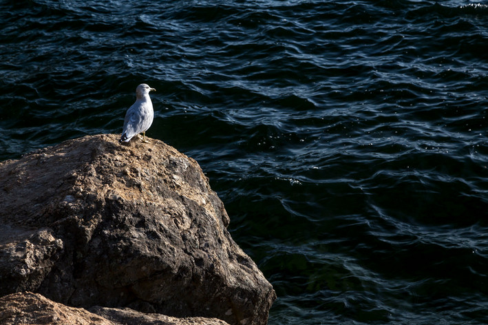 Seagull Rest