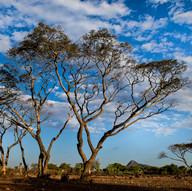 AOM_2016_08_09-10_Madagascar_212bC.jpg
