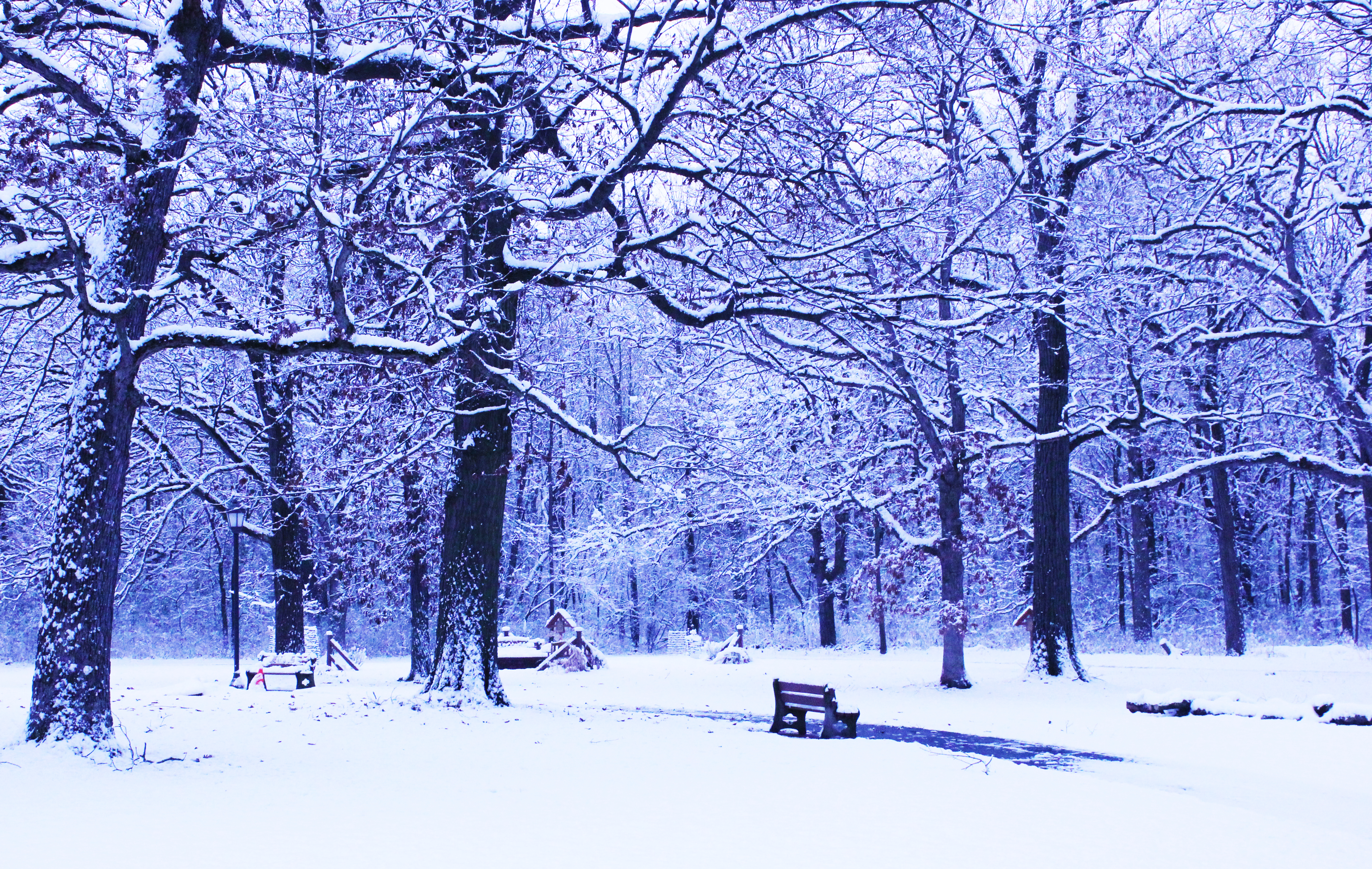 Our Grounds in the Winter