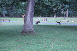 Deer on Our Property